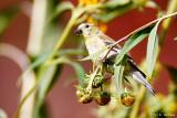 Flowery perch