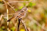 Field perch