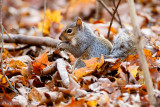 Squirrel and leaves