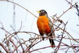 Robin and sky