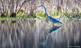 Wading in wetlands