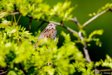 Leaves and sparrow