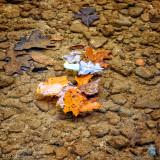 Leaves, water, rocks