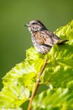Leafy perch