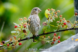 Finch and food