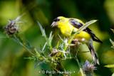 Feeding in field