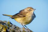 Warbler up close