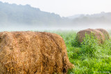 Hay in the fog
