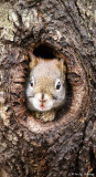 Squirrel at home
