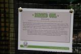 Barred Owl info