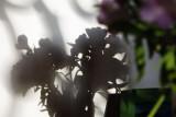 Ombre florale_7030r.jpg