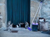 Quelques chats de Bestué-1607l.jpg