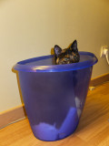 Louna aime cette poubelle-2325l.jpg