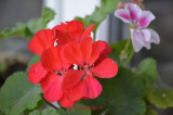 Nikon 18-140mm f/3.5-5.6G ED VR - Aperture and Zoom Test