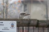 gradina-zoologica-baneasa-30.JPG