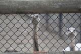 gradina-zoologica-baneasa-struti-21.JPG