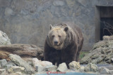 gradina-zoologica-baneasa-urs-18.JPG
