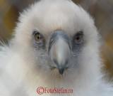 gradina-zoologica-baneasa-vultur-38.jpg