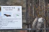 gradina-zoologica-baneasa-vultur-40.JPG