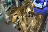 muzeul-antipa-12.JPG