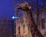 muzeul-antipa-girafa.JPG