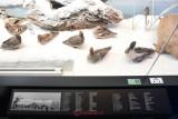 muzeul-antipa-informatii.JPG