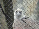 olympus-sp-100ee-iso800-vultur.JPG