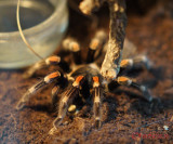 muzeul-antipa-paianjeni-scorpioni-10.JPG