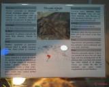 muzeul-antipa-paianjeni-scorpioni-13.JPG