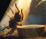 muzeul-antipa-paianjeni-scorpioni-14.JPG