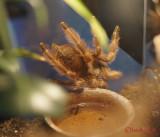 muzeul-antipa-paianjeni-scorpioni-15.JPG