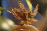 muzeul-antipa-paianjeni-scorpioni-16.JPG