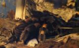 muzeul-antipa-paianjeni-scorpioni-2.JPG