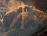 muzeul-antipa-paianjeni-scorpioni-22.JPG