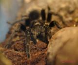 muzeul-antipa-paianjeni-scorpioni-23.JPG