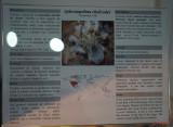 muzeul-antipa-paianjeni-scorpioni-24.JPG