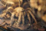 muzeul-antipa-paianjeni-scorpioni-26.JPG