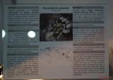 muzeul-antipa-paianjeni-scorpioni-27.JPG