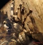 muzeul-antipa-paianjeni-scorpioni-29.JPG