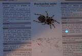 muzeul-antipa-paianjeni-scorpioni-3.JPG