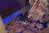 muzeul-antipa-paianjeni-scorpioni-32.JPG