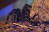muzeul-antipa-paianjeni-scorpioni-33.JPG