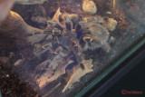 muzeul-antipa-paianjeni-scorpioni-37.JPG