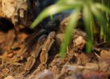 muzeul-antipa-paianjeni-scorpioni-39.JPG