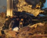 muzeul-antipa-paianjeni-scorpioni-4.JPG