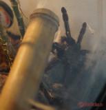 muzeul-antipa-paianjeni-scorpioni-41.JPG