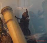 muzeul-antipa-paianjeni-scorpioni-42.JPG
