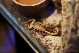 muzeul-antipa-paianjeni-scorpioni-43.JPG