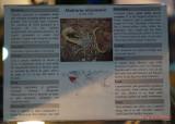 muzeul-antipa-paianjeni-scorpioni-45.JPG