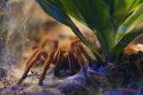 muzeul-antipa-paianjeni-scorpioni-48.JPG